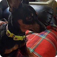 Adopt A Pet :: Penny - Eugene, OR