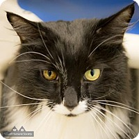 Adopt A Pet :: Tommy - Lowell, MA