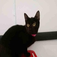 Adopt A Pet :: DOS - Canfield, OH