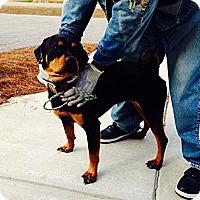 Adopt A Pet :: Lariane - Poughkeepsie, NY