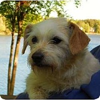 Adopt A Pet :: Ariel - Raleigh, NC
