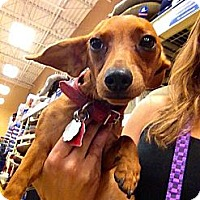 Adopt A Pet :: Archur - Silsbee, TX