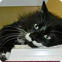 Adopt A Pet :: Patter - Cheyenne, WY