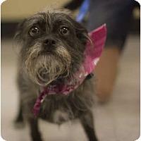 Adopt A Pet :: Ellie - Arlington, TX