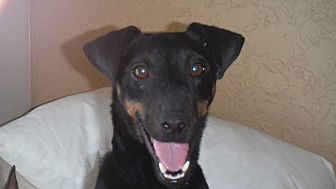 Miniature Pinscher Mix Puppy for adoption in Arenas Valley, New Mexico - Cara