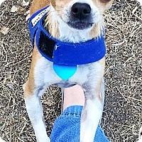 Adopt A Pet :: Justin - AUSTIN, TX