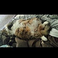 Adopt A Pet :: FL - Clarence (CP) - Gainsville, GA