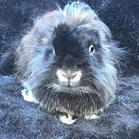 Adopt A Pet :: Grier - Watauga, TX