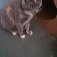 Adopt A Pet :: Zena - Pasadena, CA