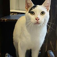 Adopt A Pet :: Coconut - Lafayette, NJ