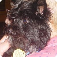 Adopt A Pet :: Brutus 2017 (m/c) - Chesterfield, MI
