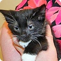 Adopt A Pet :: Newton - Wildomar, CA