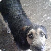 Adopt A Pet :: Riley - Cuero, TX