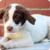 Adopt A Pet :: Rappy - Waldorf, MD