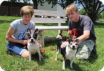 Boston Terrier/Beagle Mix Dog for adoption in Elyria, Ohio - Alexa & Jordan