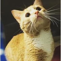 Adopt A Pet :: Blaze - Sanford, NC