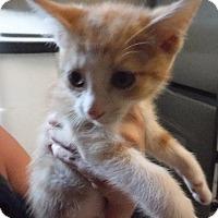 Adopt A Pet :: Randy - Batesville, AR