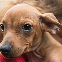 Adopt A Pet :: Maskoki - West Warwick, RI