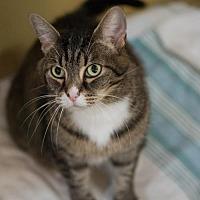 Adopt A Pet :: Bunny-2 - Montreal, QC