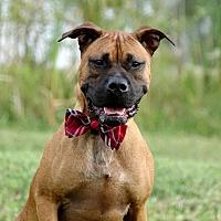 Adopt A Pet :: Buddy the Elf - Columbia, IL