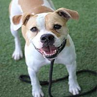 Adopt A Pet :: DEXTER - Los Angeles, CA