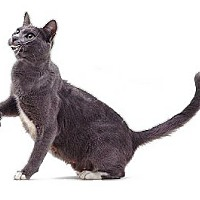 Adopt A Pet :: Gracie 2 - Port Republic, MD