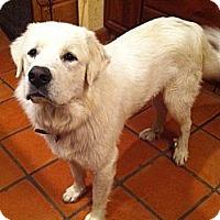Adopt A Pet :: Cooper  *NEW - Oklahoma City, OK
