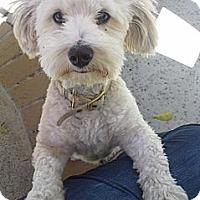 Adopt A Pet :: VERN - Mission Viejo, CA