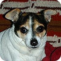 Adopt A Pet :: Ripley - Oklahoma City, OK