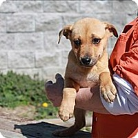 Adopt A Pet :: Hailey(PENDING!) - Chicago, IL