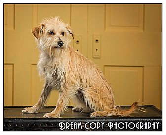 Terrier (Unknown Type, Small) Mix Dog for adoption in Owensboro, Kentucky - Lola