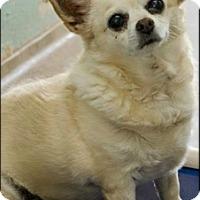 Adopt A Pet :: Mini - Brooksville, FL