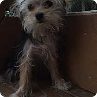 Adopt A Pet :: Athena - Algonquin, IL