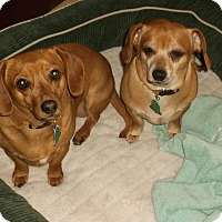 Adopt A Pet :: Mary Kate & Ashley - Georgetown, KY