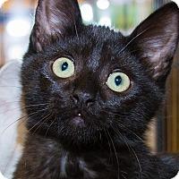 Adopt A Pet :: Bandit - Irvine, CA