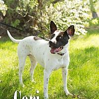 Adopt A Pet :: Cori - Cheyenne, WY