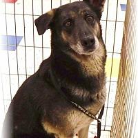 Adopt A Pet :: Shay - Las Vegas, NV