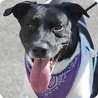 Adopt A Pet :: HAPPY - Clayton, NJ