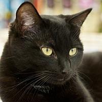 Adopt A Pet :: Gladys - Great Falls, MT