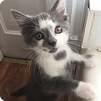 Adopt A Pet :: Gilbert - Shelbyville, KY
