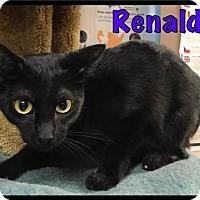 Adopt A Pet :: Renaldo - 375 / 2017 - Maumelle, AR