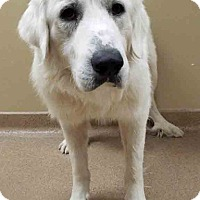 Adopt A Pet :: ADOPTED!!!   Danny - Oswego, IL