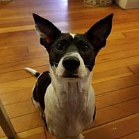 Adopt A Pet :: Bones - Brunswick, ME