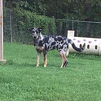 Adopt A Pet :: Gizmo - Crocker, MO