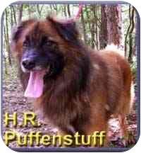 Collie Mix Dog for adoption in Aldie, Virginia - H.R. Puffenstuff