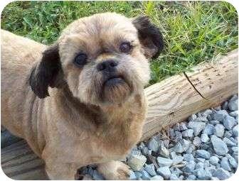 Shih Tzu Dog for adoption in Harrisonburg, Virginia - Amigo and Misty (TIA)