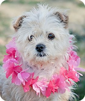 Terrier (Unknown Type, Small) Mix Dog for adoption in Portsmouth, Rhode Island - Cashew