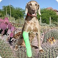 Adopt A Pet :: CACTUS PETE - Albuquerque, NM