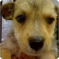 Adopt A Pet :: Wendy - Fowler, CA