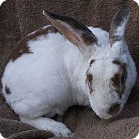 Adopt A Pet :: Bixby - Santee, CA